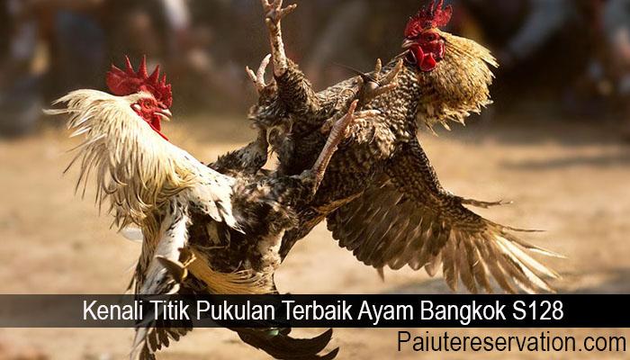 Kenali Titik Pukulan Terbaik Ayam Bangkok S128