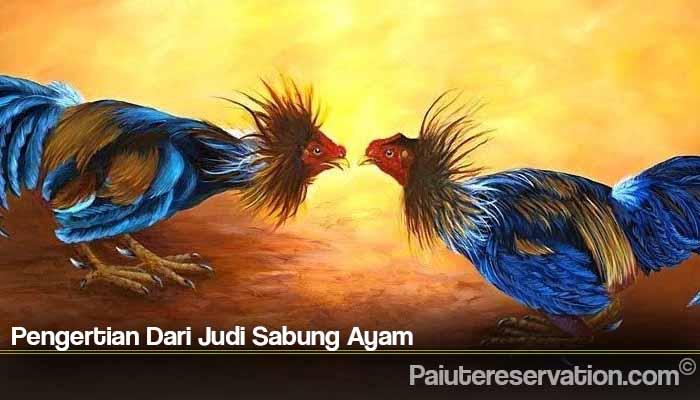 Pengertian Dari Judi Sabung Ayam
