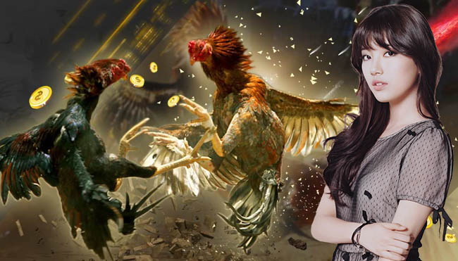 Cara Menguntungkan Memainkan Taruhan Sabung Ayam